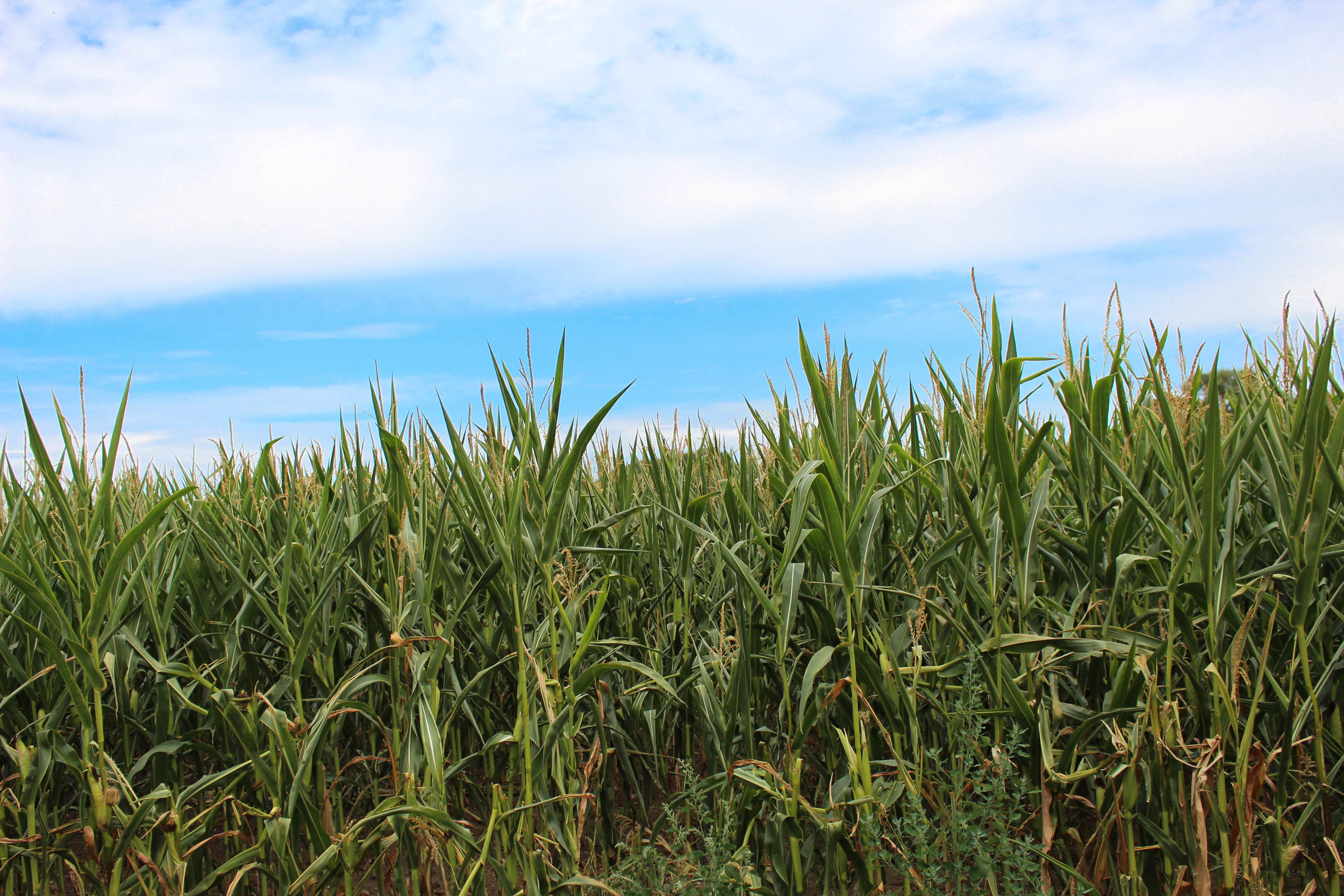 Bild von einer Landschaft